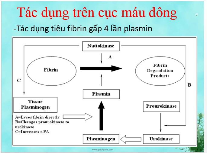 tác dụng của nattospes trên cục máu đông